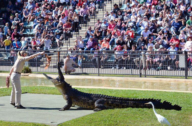 croc-tours-tour-experience-koala-crocodile-exhibition-animal-zoo